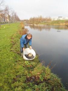 Vis uitzetten Velserbroek 2011
